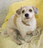 Molly (Jack Russell x ...