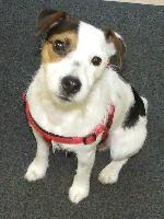 Albi xx (Jack Russell ...