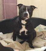 Chesney xx (SBT)
