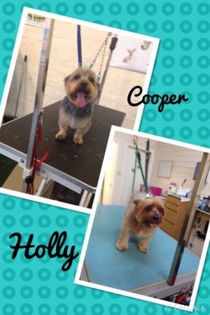 Holly & Cooper xx