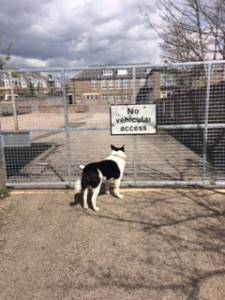Second Chance Kennels