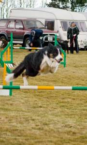 Second Chance agility dogs.jpg