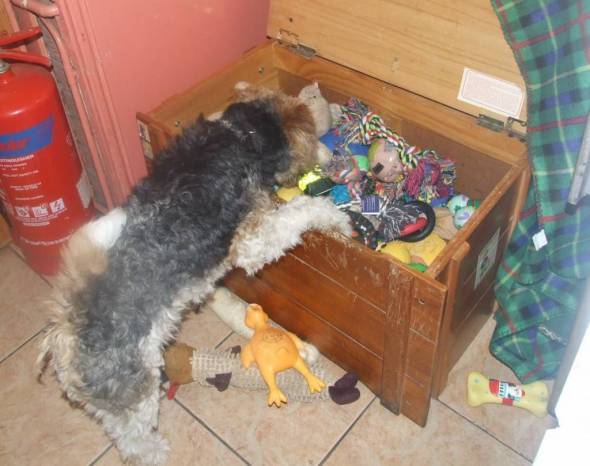 Harris found the toy box lol.x