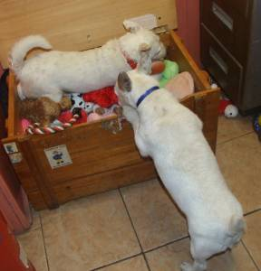 Had to share wee Louis 's pics !!with him in the toy box. He is on Homeless Hounds !!